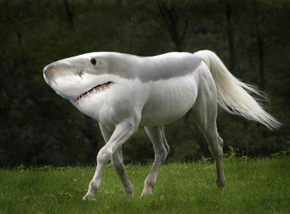 horse with shark head