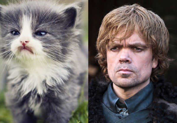 Tyrion Lannister - Game of Thrones Characters as Cats