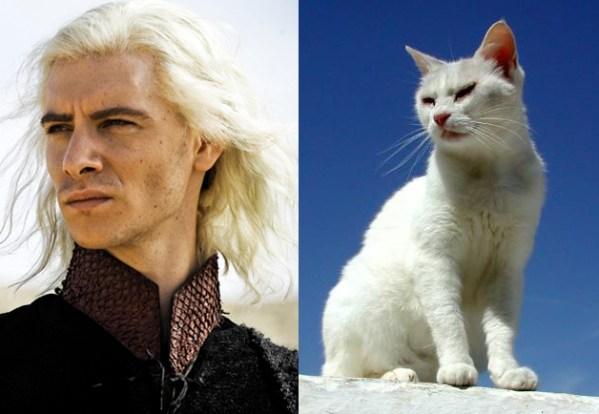Viserys Targaryen - Game of Thrones Characters as Cats
