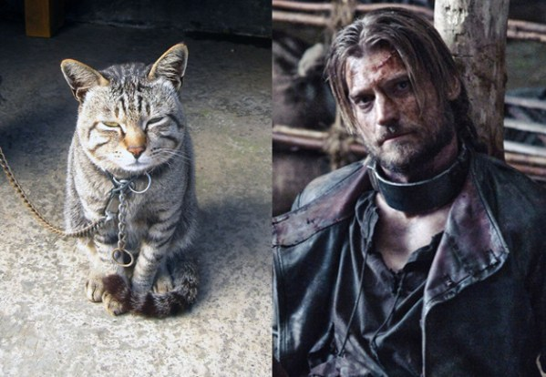 Jaime Lannister - Game of Thrones Characters as Cats