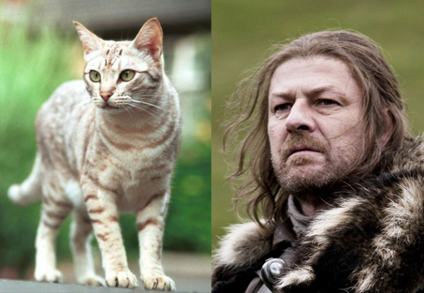 Eddard Stark - Game of Thrones Characters as Cats