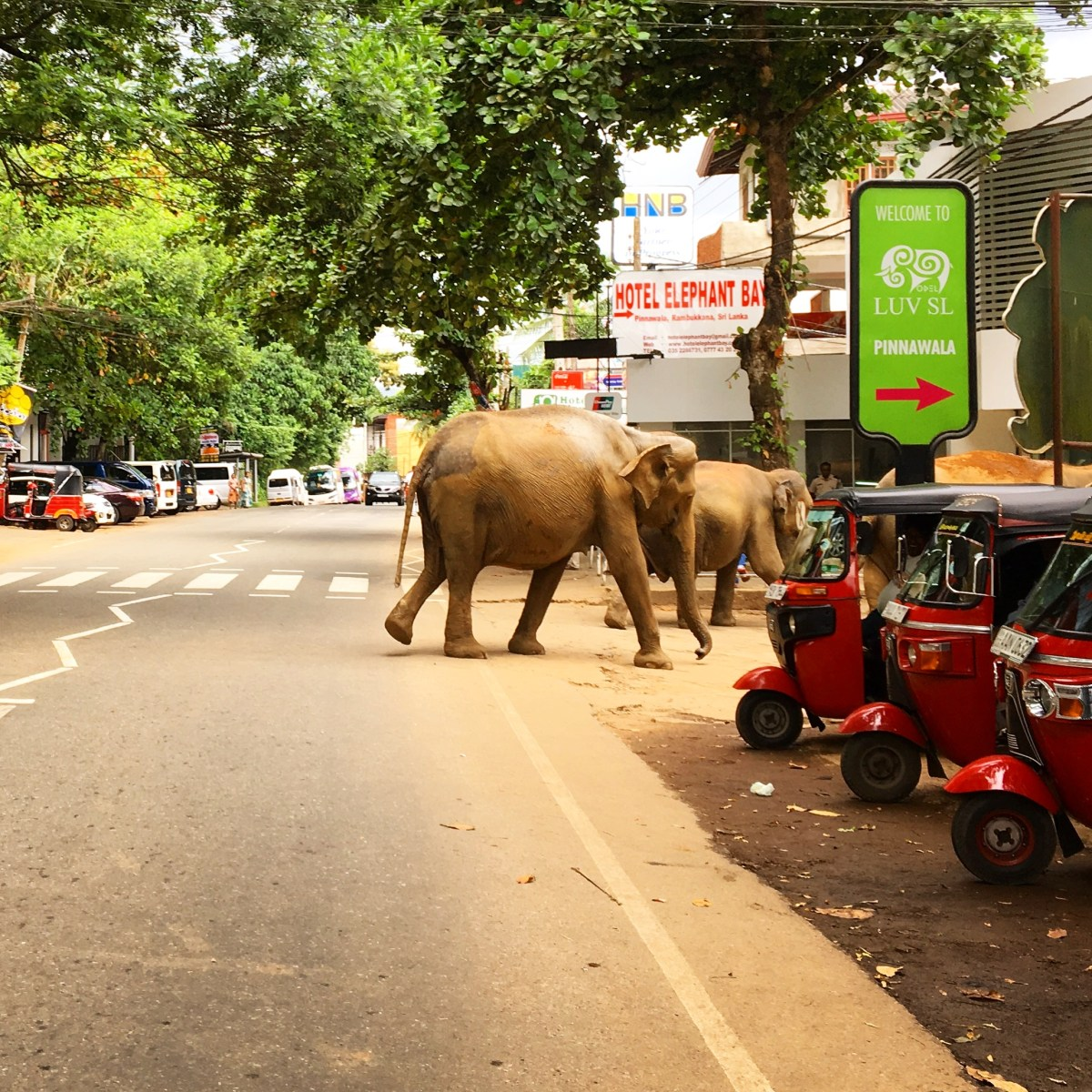 From Elephants In The Wild To Cricket By The Sea - My Top 60 Sri Lanka Photos