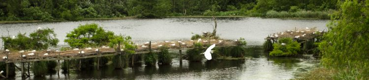 An egret flies away from nesting platform