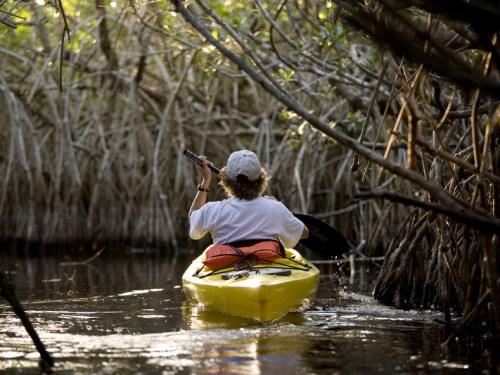 Central Everglades