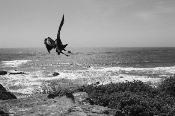corbeau big sur