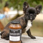 Teacup French Bulldog Mini French Bulldog Puppies For Sale