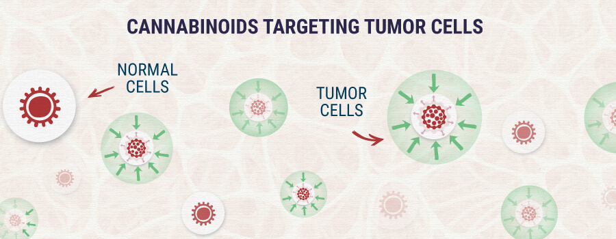 カンナビノイド-ターゲティング-腫瘍細胞