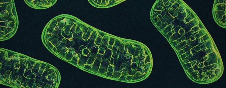 Metabolism The Endocannabinoid System