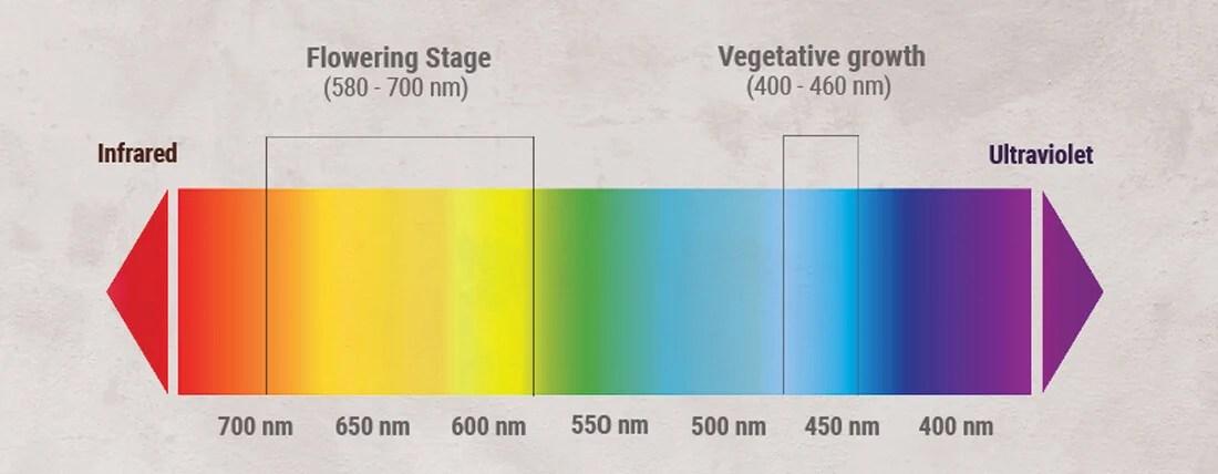 光-スペクトル成長-大麻
