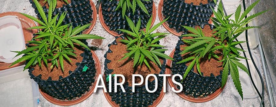 Air Pots Cannabis Culture