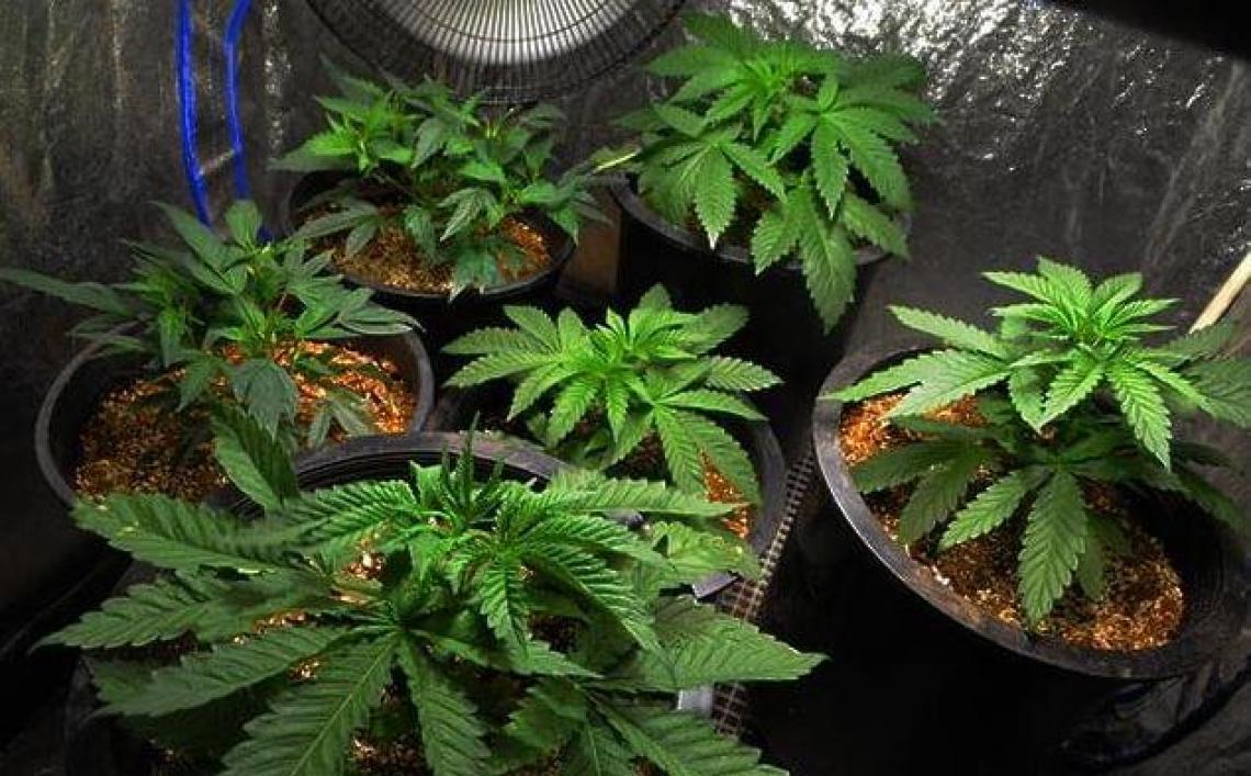 Cannabis tente d'intérieur