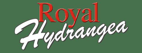 Royal Hydrangea Hortensia