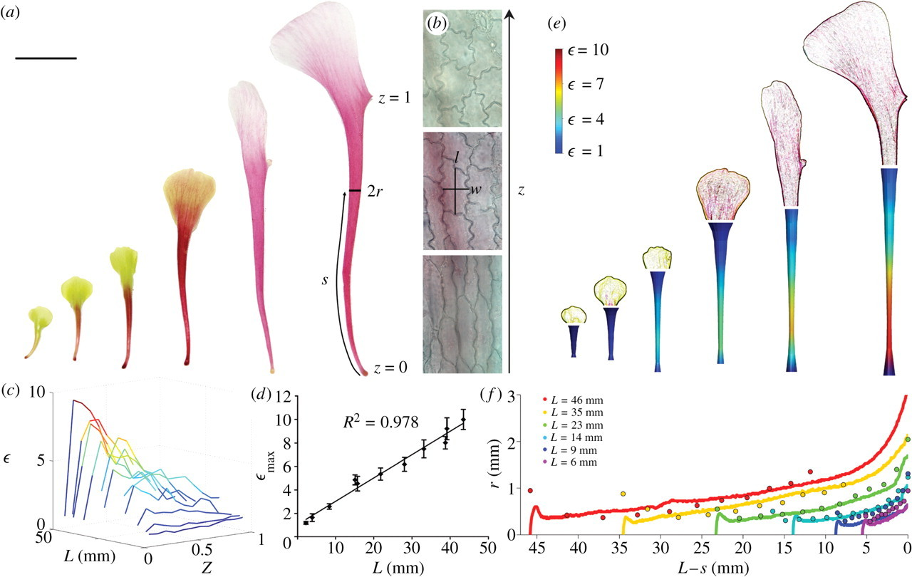 Biological Growth Curves