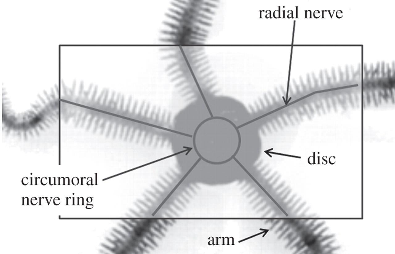 A Decentralized Control Scheme For Orchestrating Versatile