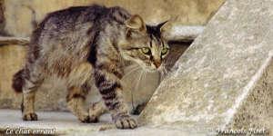 A Royan il y a trop de chat
