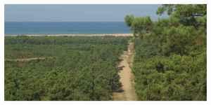 Optimiser le prélèvement du bois de la forêt de la Coubre sans la détruire