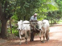 Kampot112