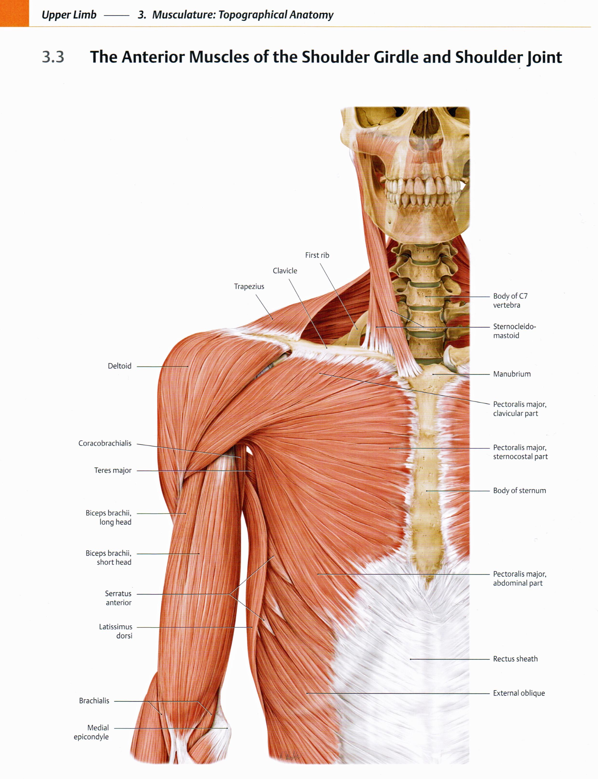 Diagram Front Neck