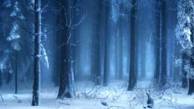 Imagem do podcast TESTE 2 do RPG Next - Floresta cheia de neve
