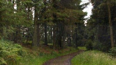 Trilha entre árvores - Imagem do Tarrasque na Bota 02 - A mina perdida de Phandelver - Episódio 2 - Emboscada na Trilha do Javali