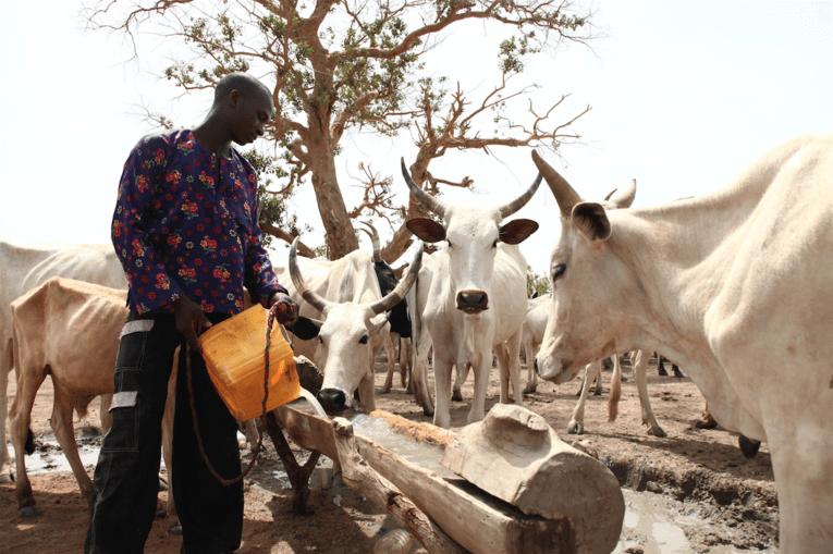 Un éléveur peul du Mali