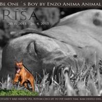 Be One´s Boy By Enzo Anima Animal (Ríša) – 20.6.2011 – 26.4.2015