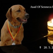 Asad Of Senecca Kings – 15.9.2005 -20.5.2013