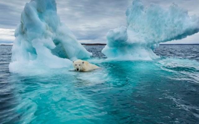 OKB jep alarmin: Njerëzimi rrezikon zhdukjen nga ngrohja globale