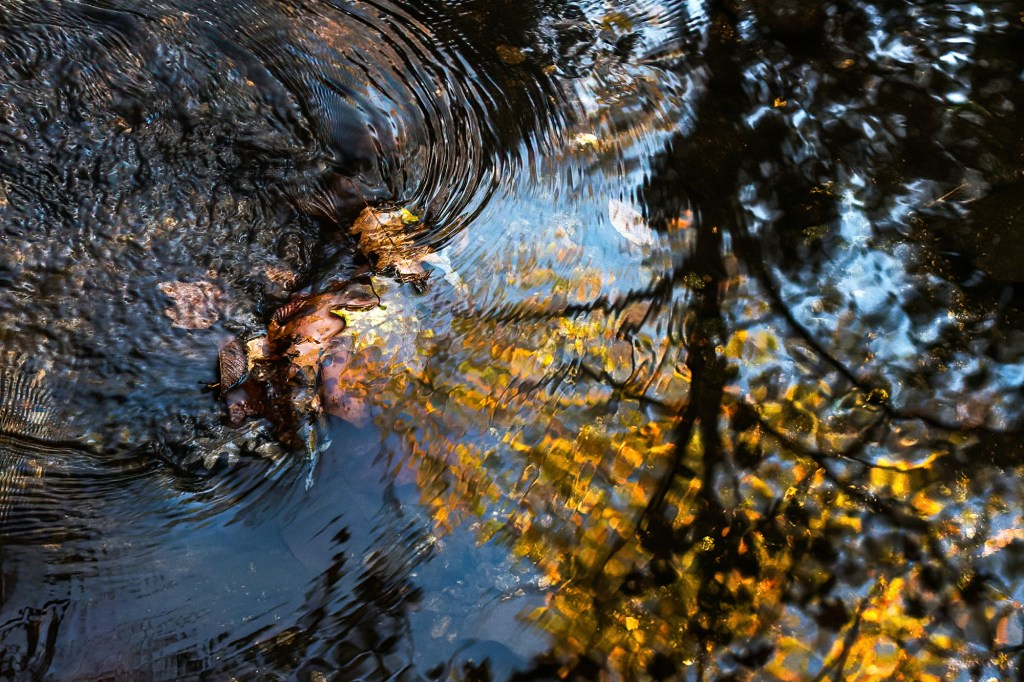 Leaf Ripples, photograph by Mark Leatherman