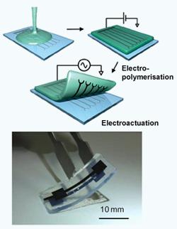Hydrogel electrode