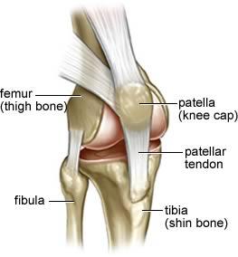 Die anatomie van die knie met sy ligamente