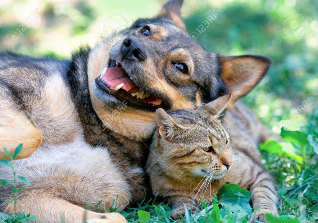 Het diere individuele persoonlikhede?