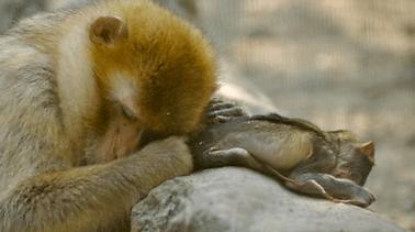 Het diere enige begrip van gevaar, pyn en dood?