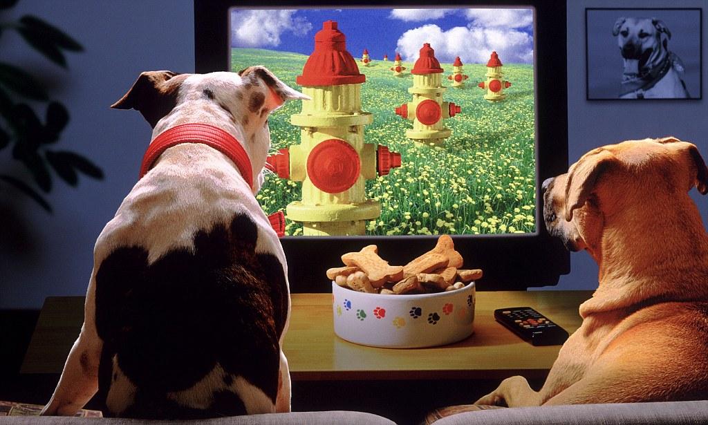 Blaasoppies, honde wat TV kyk en hondsdolheid