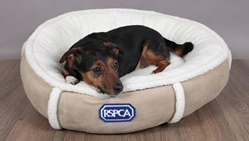choosing the perfect dog bed rspca