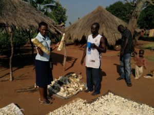 Paula holding two cassava roots during a visit to cassava farmer (in the white t-shirt) in the Apac district, one of her study sites.