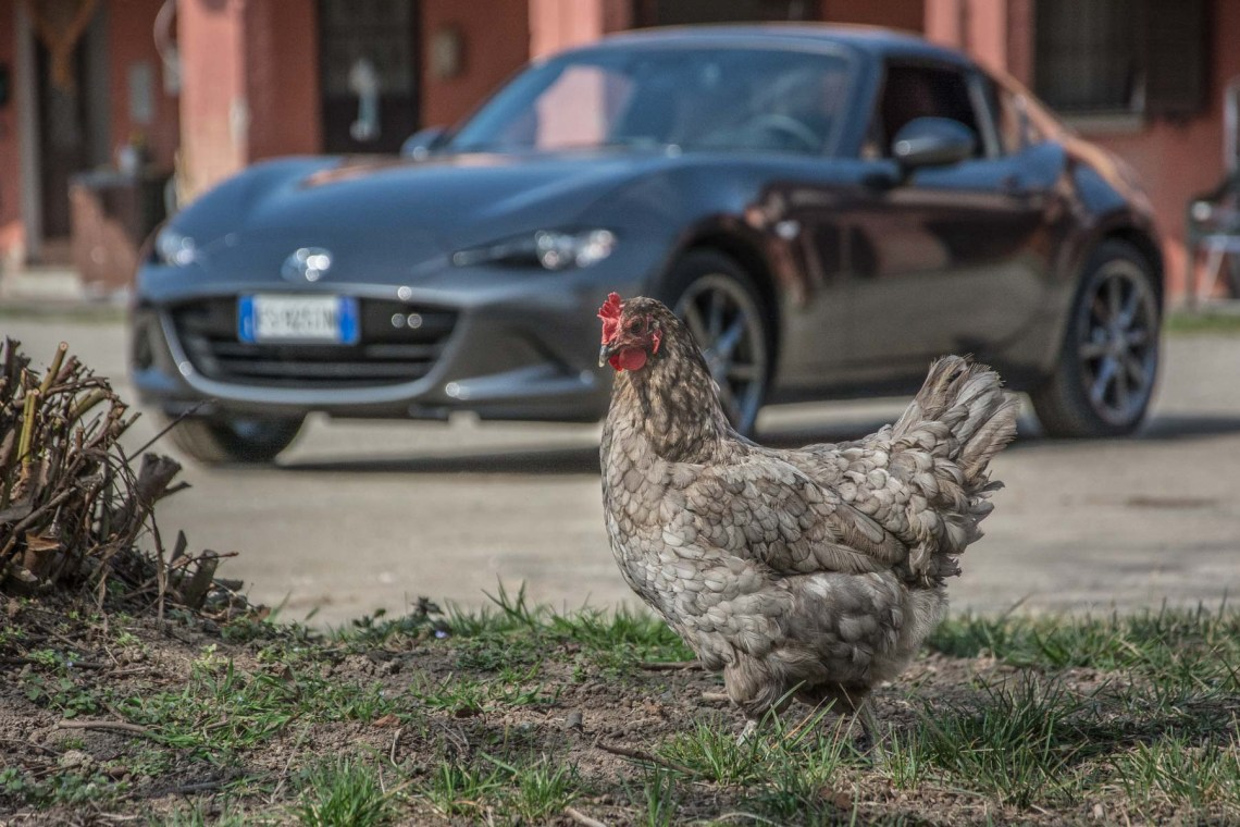 Mazda MX-5  Copyright: Matteo Marinelli @rtearth #RTEARTH #RTEARTHTEAM