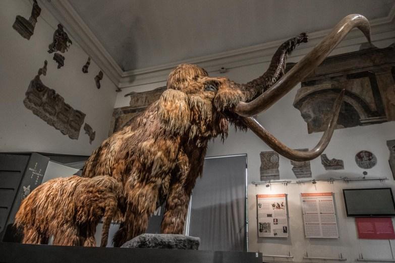 Ricostruzione di Mammut, Museo di Scienze Naturali E. Caffi
