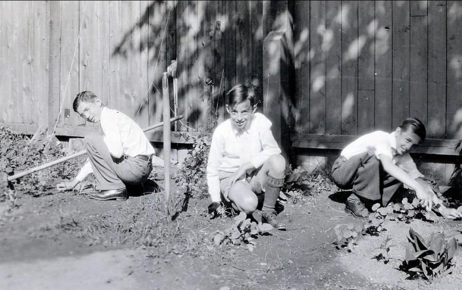 1937, Louis, Maurice et Robert avec leurs lopins