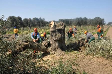 Eccidio degli olivi a Oria 13_04_15.Foto di Valerio Saracino 03