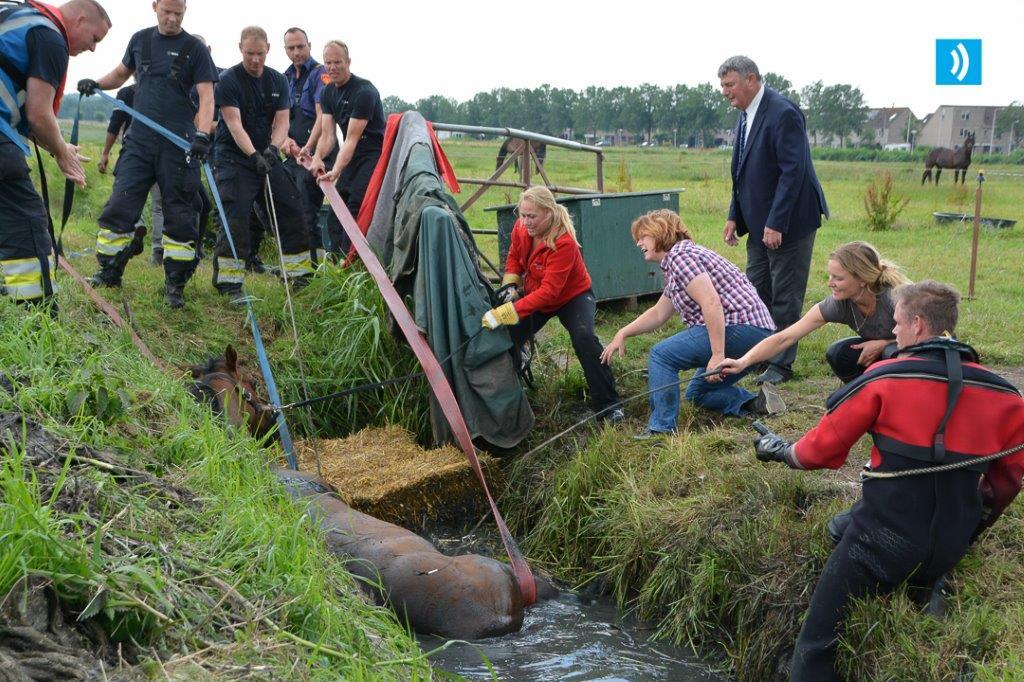 2016-06-28 Paard in de sloot Velserbroek (3)