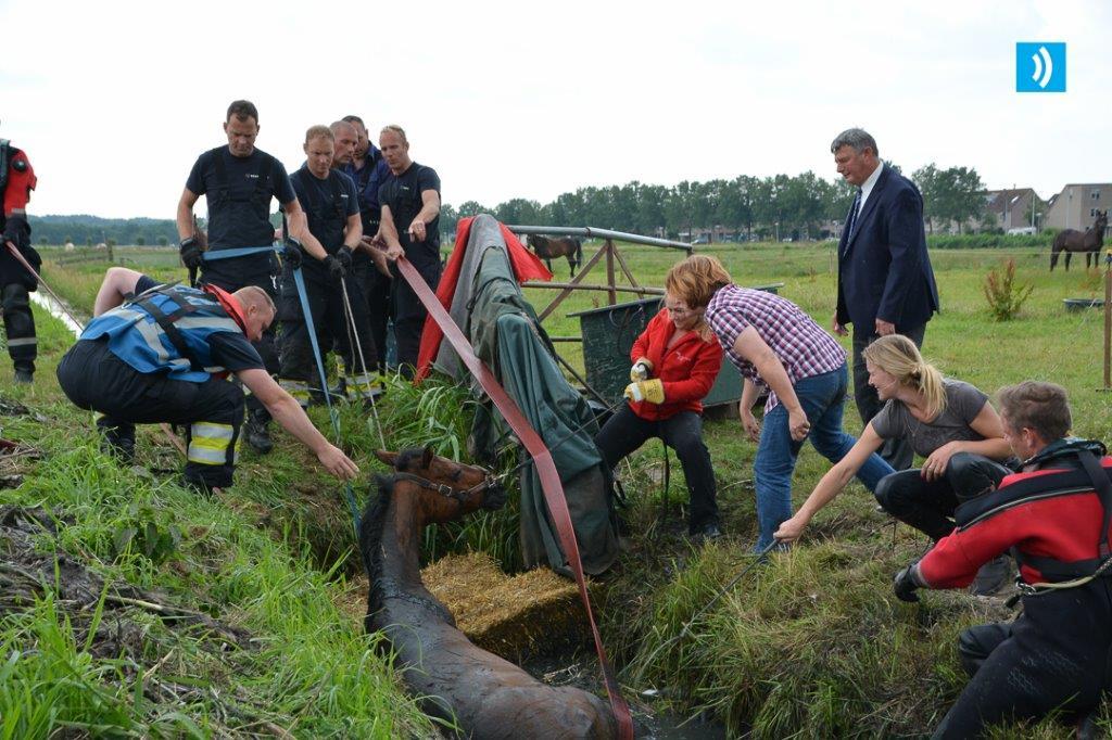 2016-06-28 Paard in de sloot Velserbroek (4)