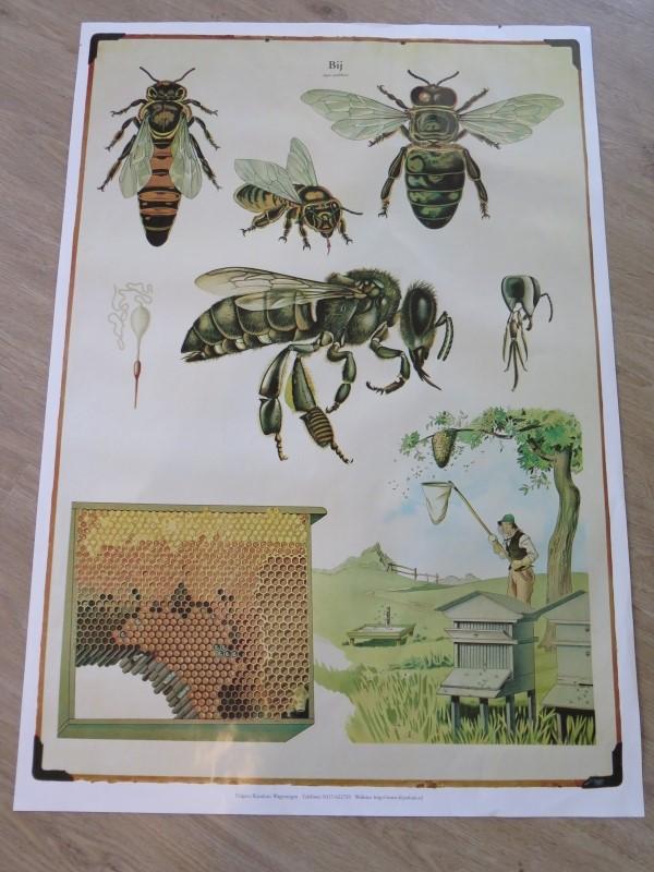 Bijen-actie museum en kinderboerderij