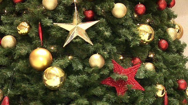 Kerst- en wintergroenexcursie Velserbeek
