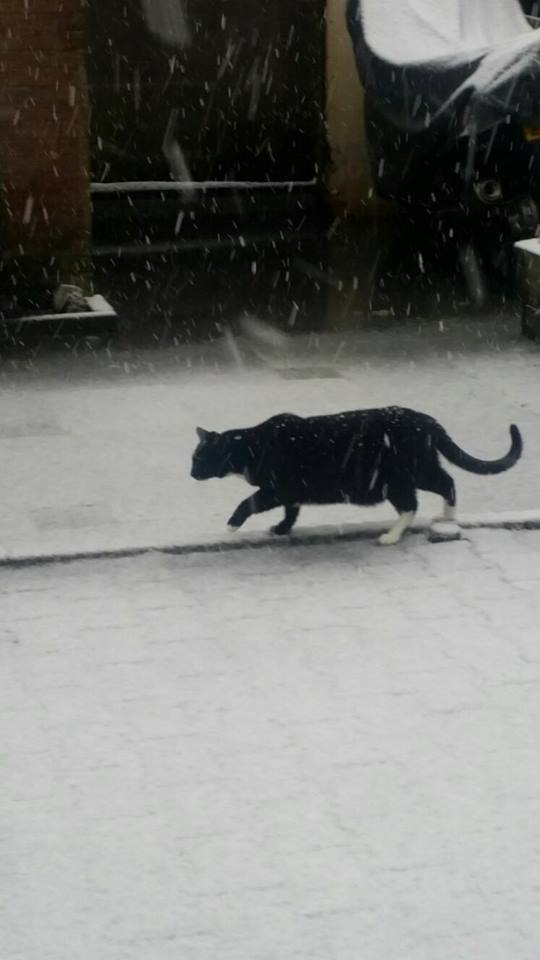 Sneeuw Manon de Gier