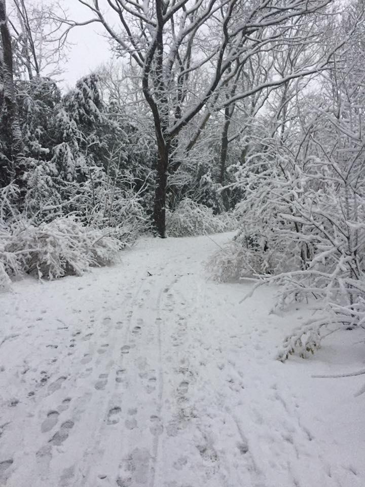 Sneeuw Sonja Tol