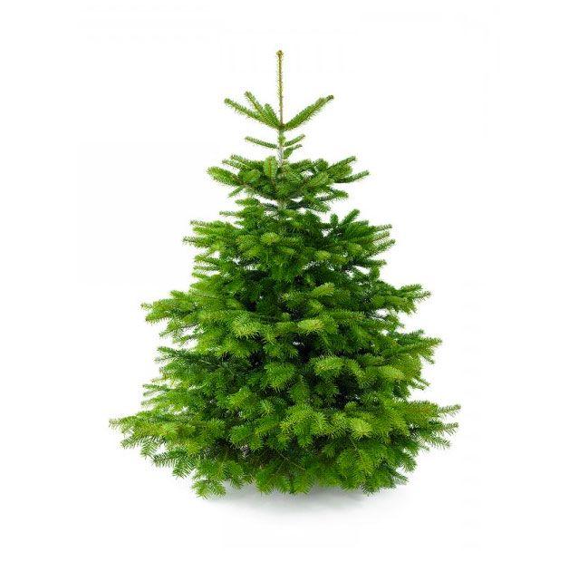 Adoptie-kerstbomen af te halen