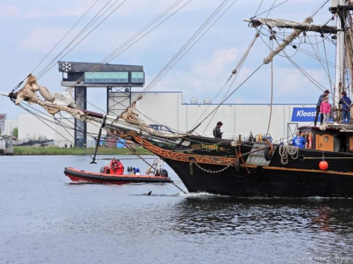Dolfijn weer terug gekeerd naar Noordzee