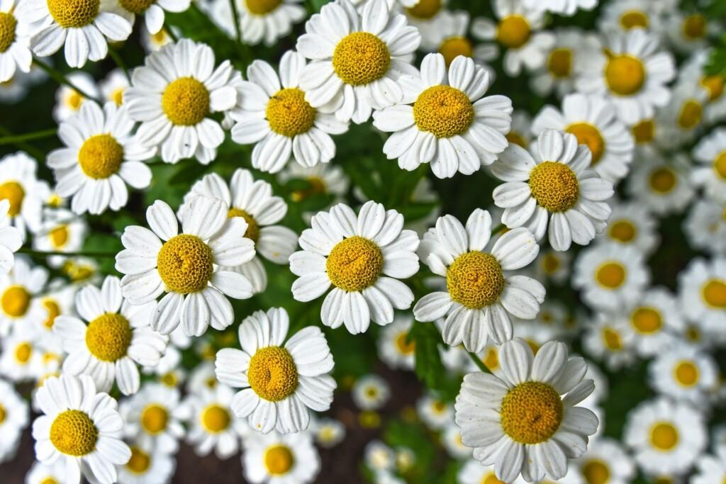 Dance Valley strooit bloemen op Velsen Valley in Spaarnwoude