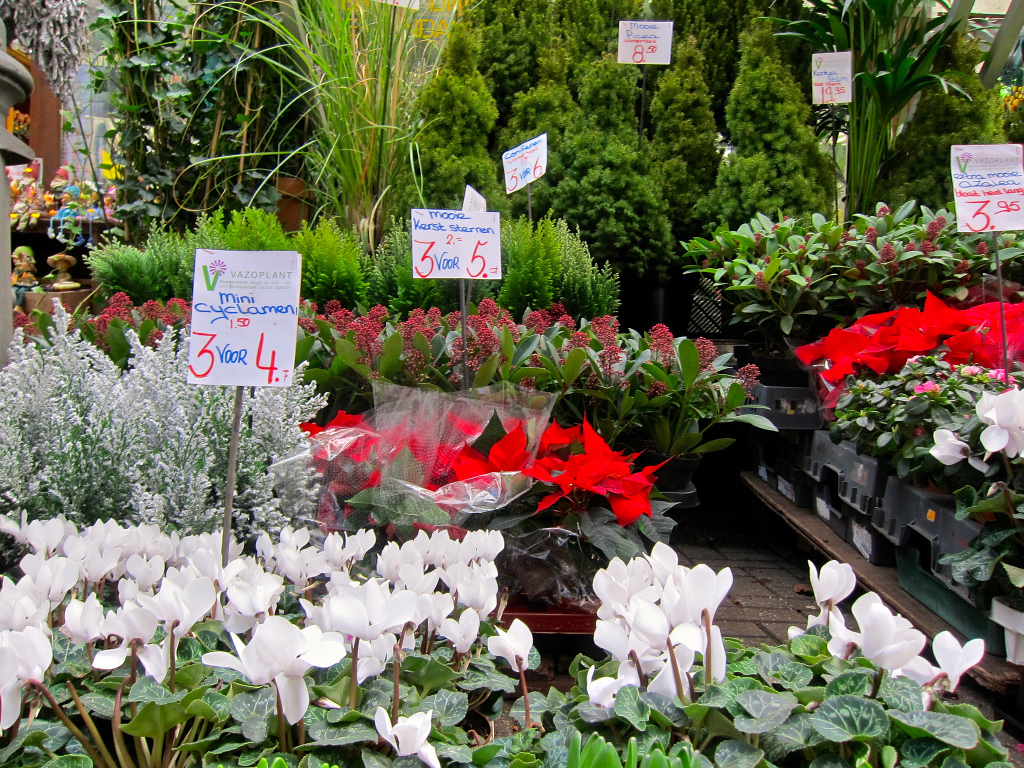 Christmas plants Amsterdam